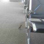 New Instagram: airport bird #bird #airport #animals #ontario #california #america #birds #tweeting