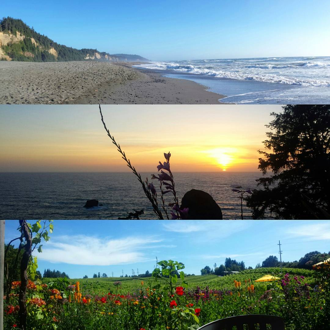 New Instagram Redwood National And State Parks Trinidad Airbnb Wine Country California Travel Ocean Beach